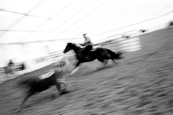rodeo, cavalli, horses, speed