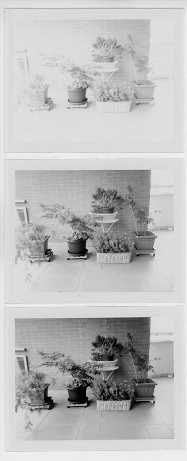 plants on my balcony
