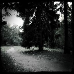 nel bosco (3 di 6)
