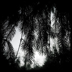 nel bosco (4 di 6)
