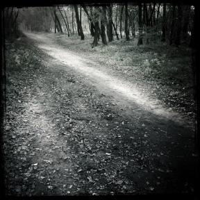 nel bosco (5 di 6)