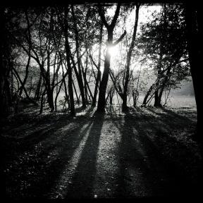nel bosco (6 di 6)