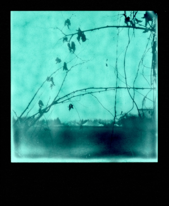 duotone-winter-sx70002