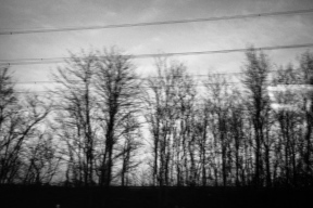 Trees and wires